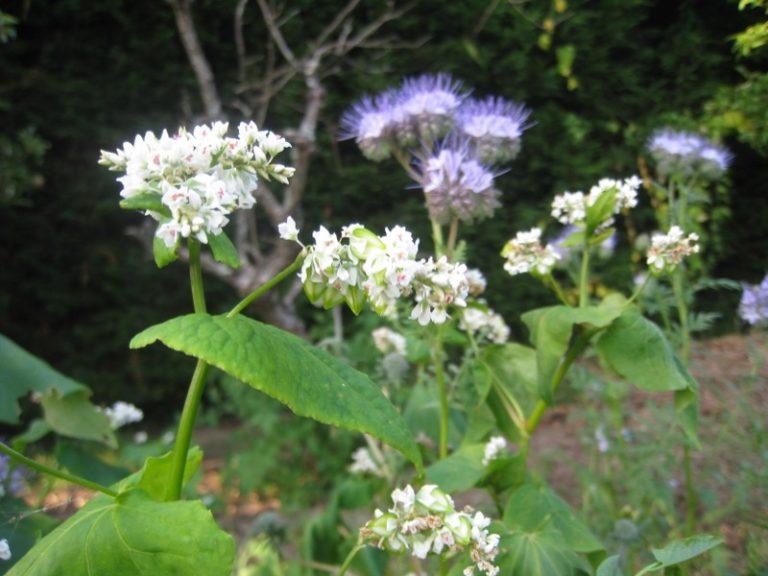 Cordemais - Jardinage forestier