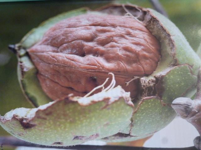 Pathologie végétale - Feuille