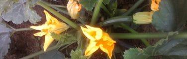 Plante à fleurs - Flore