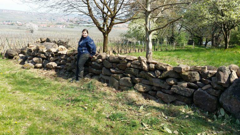 Mur de pierre - Pâturage