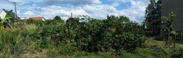 Arbuste - Biome