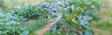 Arbuste - Surgir