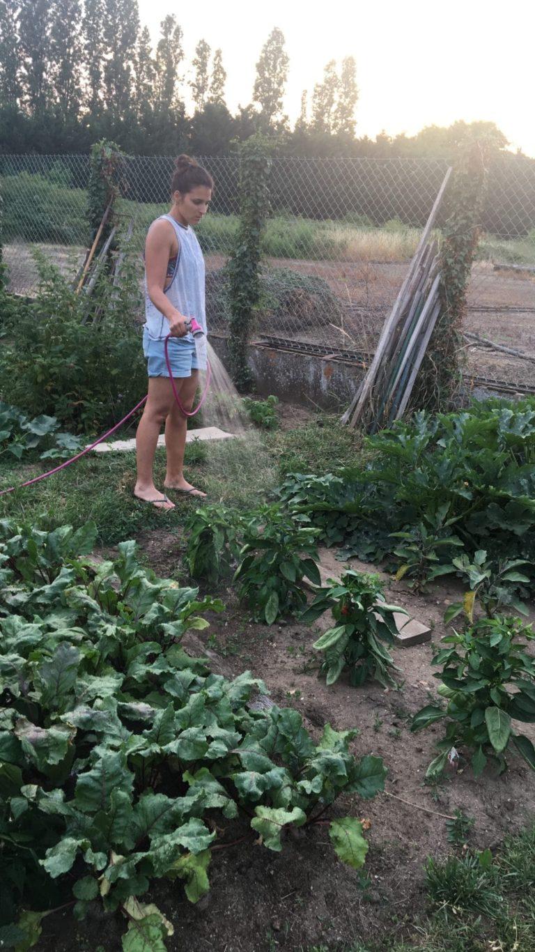 Communauté végétale - Agriculture