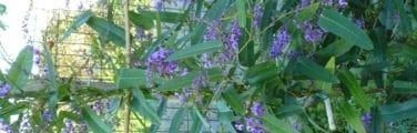 Plante à fleurs - Fleur