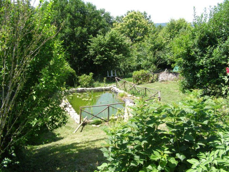 Zone riveraine - Végétation