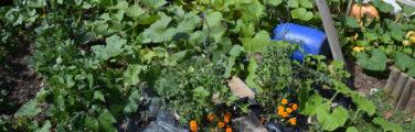 Jardin - Herbe