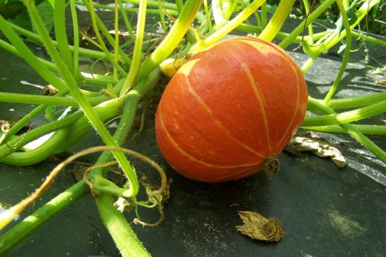 La ferme Kabocha - L'agriculture biologique