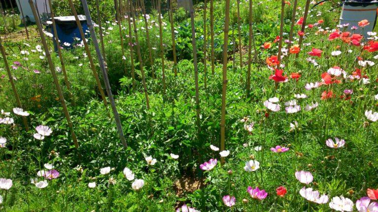 Jardin - Couverture de sol