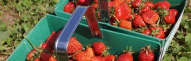 Fruit - Cueillette de l'aragnon