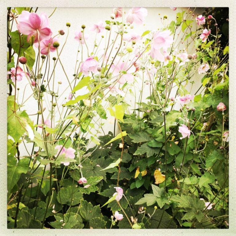 Plante à fleurs - Plante annuelle
