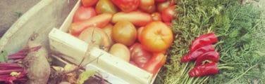 l'alimentation de rue - Nourriture naturelle