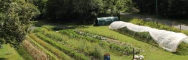 Jardin botanique - Végétation