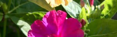 Plante à fleurs - Eure-et-Loir