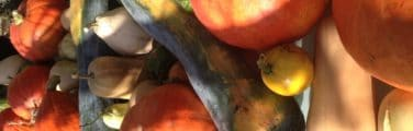 Courge butternut - Tomate