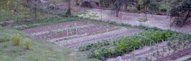 Arbuste - Végétation