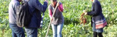troc de surplus de jardin, lepotiron.fr