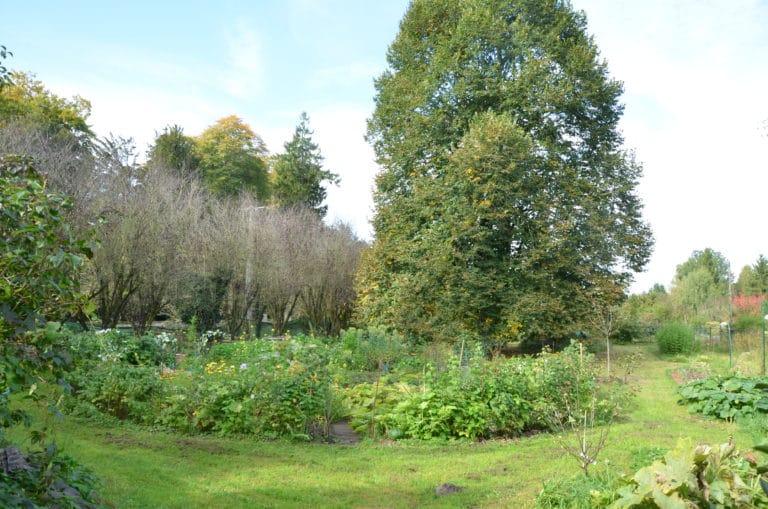 Végétation - Arbuste