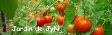 Avessac - Tomate Bush