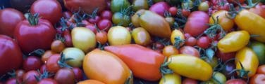 Tomate - Davayat