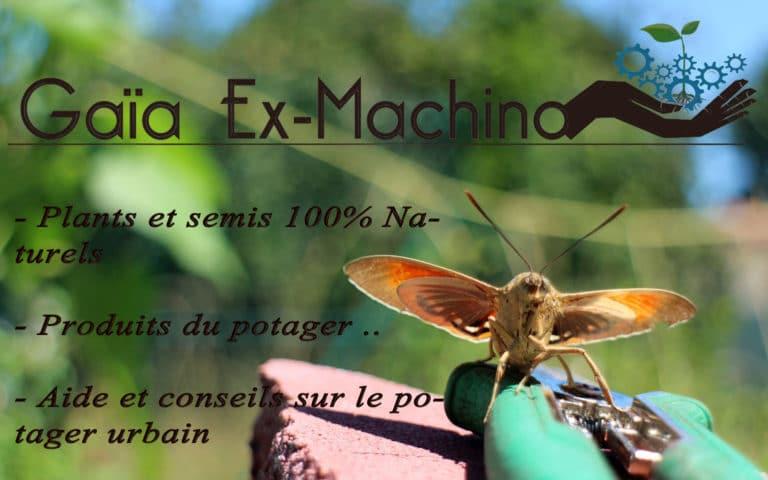 La Lande-de-Fronsac - Papillons