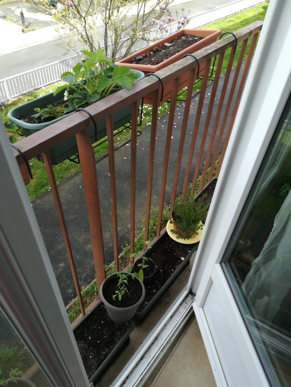 Plants de tomates et fraisiers balcon rennes ille et for Entretien jardin ille et vilaine