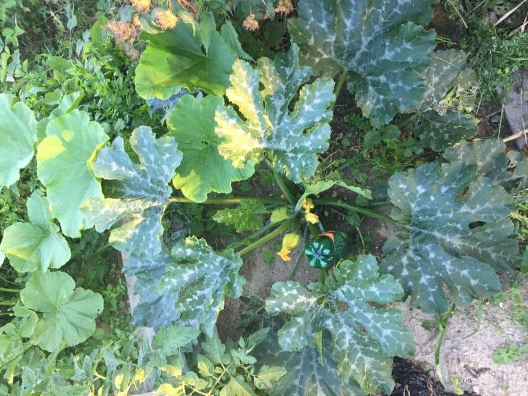 Feuille - Légume-feuille