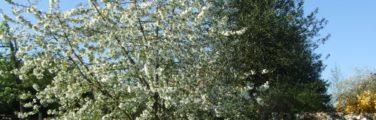 Les plantes - Arbuste