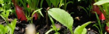 Feuille - Legumes de printemps