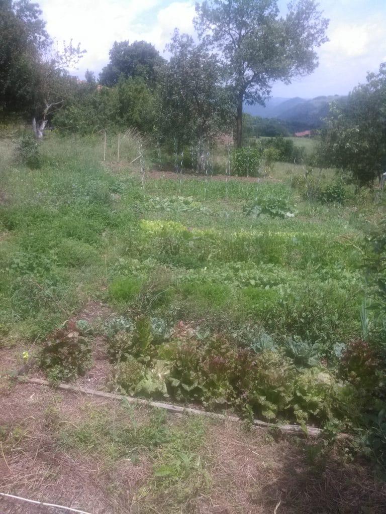 Broquiès - Arbuste