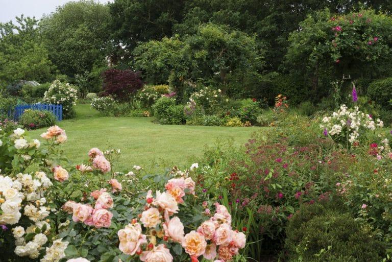 Jardin - Roses de jardin