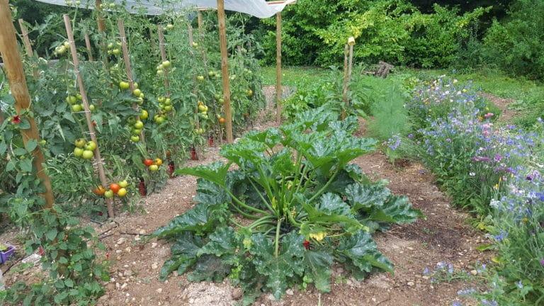 Arbuste - Communauté végétale