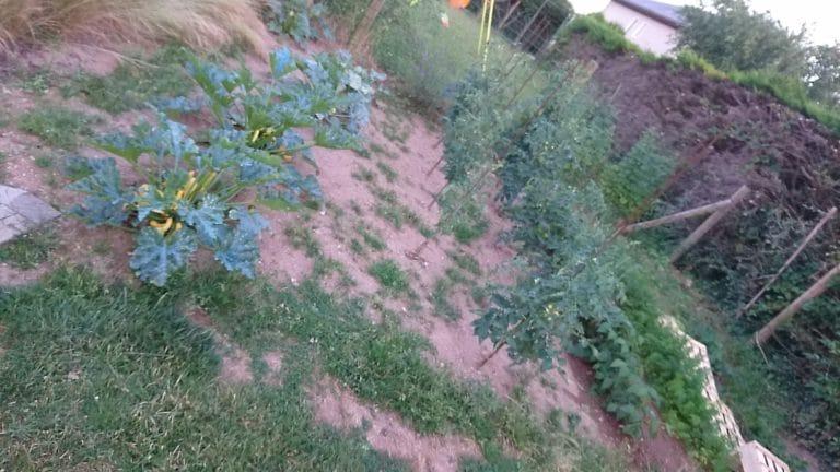 Biome - Arbuste