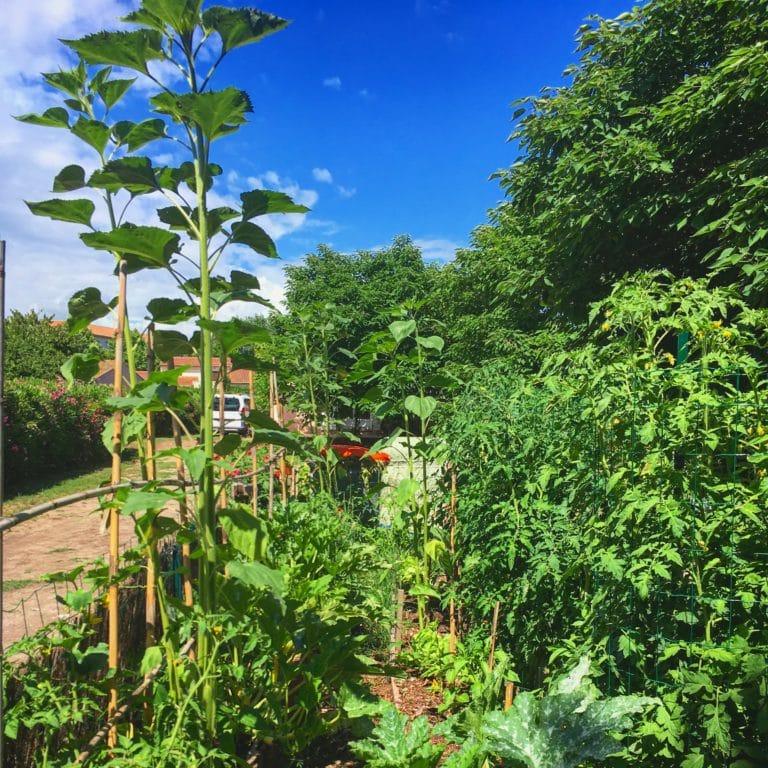 Permaculture - Jardin