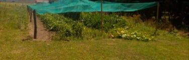 Communauté végétale - Immobilier