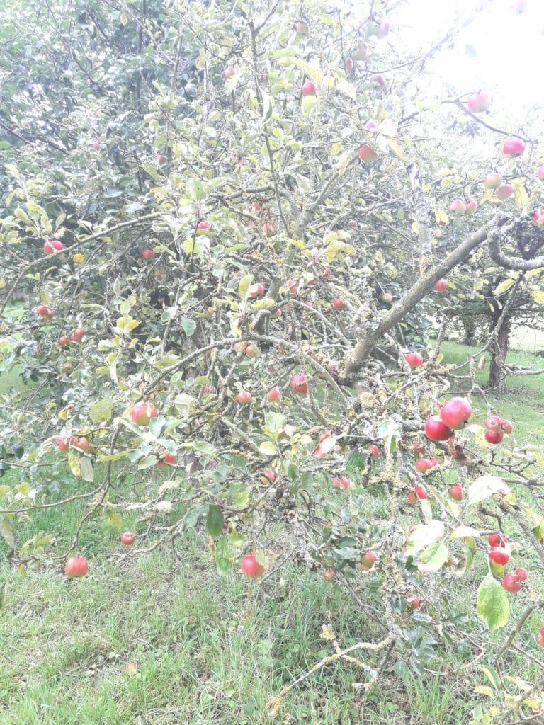 Arbuste - M-arbre