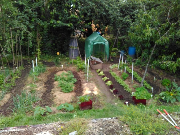 Permaculture - Agriculture