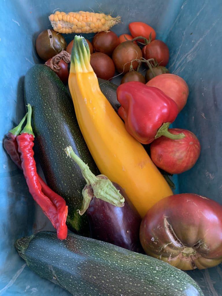 Tomate - Poivrons