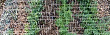 Jardin - Clôture à mailles de chaîne