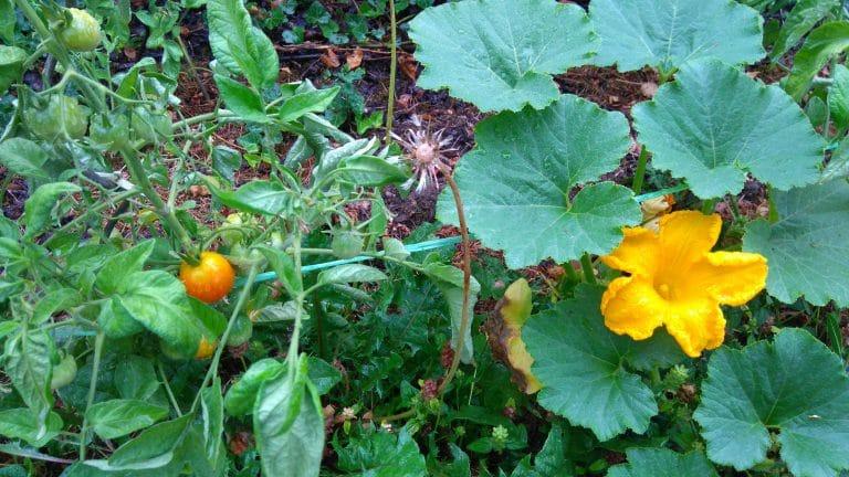Plante à fleurs - Feuille