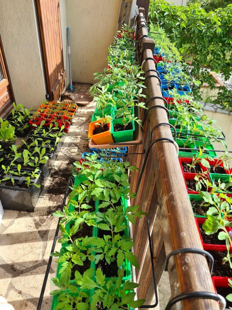 Jardin - Plante d'appartement