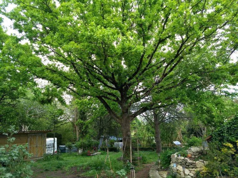 Biome - Végétation