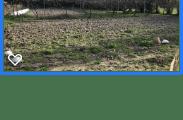 Communauté végétale - Pelouse