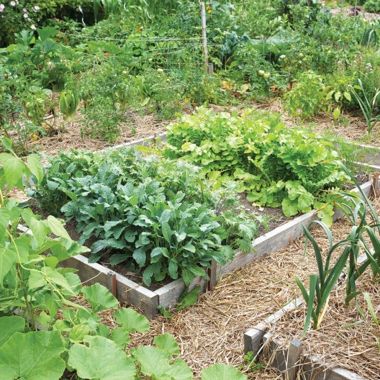 Jardin - Jardinage