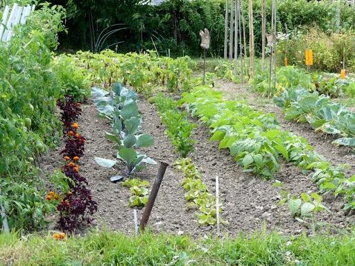 Potager - Jardin